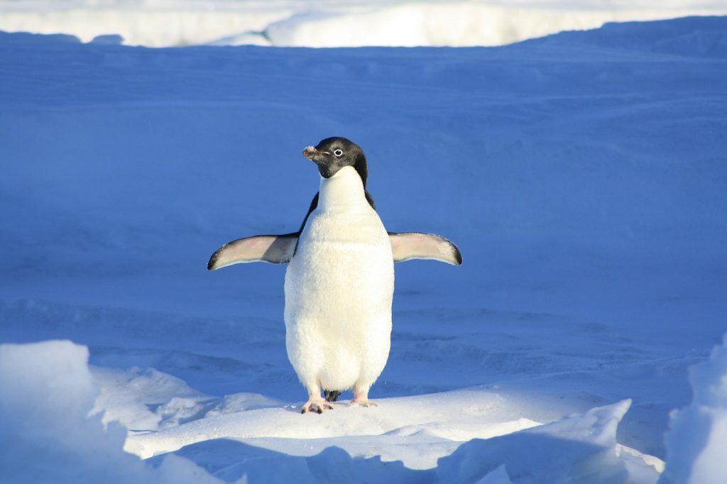 penguin-56101_1280-1024x682.jpg
